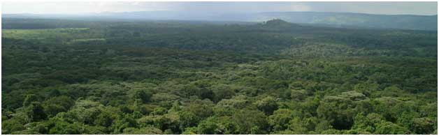 A view out over the Kakamega Forest